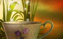 Fitoenergética: como equilibrar a alma através das plantas.